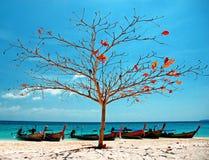 Bamboo island Royalty Free Stock Photo