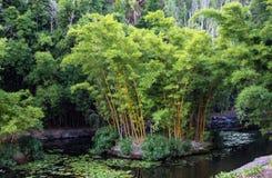Bamboo island in lake in botanical gardens with lily pads. Bamboo island in shallow lake in botanical gardens with lily pads Stock Photos