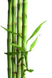 Bamboo isolated Stock Images