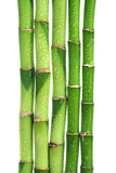 Bamboo isolated Stock Photos