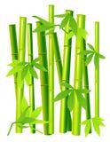 Bamboo on isolated background Royalty Free Stock Image