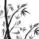 Bamboo isolated illustration. Royalty Free Stock Photo