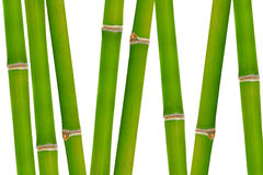 Bamboo. Isolated on white background Royalty Free Stock Photography