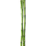 Bamboo. Stock Photos