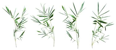 Bamboo isolated on white background with clipping path royalty free stock photos