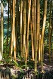 Bamboo in Italian Garden Stock Photo