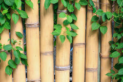 Bamboo and ivy Royalty Free Stock Image