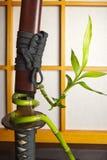 Bamboo and japanese sword. Bamboo shoot growing around a japanese samurai sword Royalty Free Stock Images