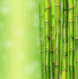 Bamboo jungle background Stock Photos