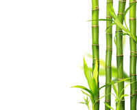 Bamboo jungle background Royalty Free Stock Photography
