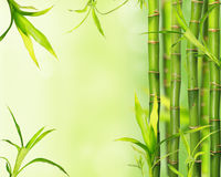 Bamboo jungle background Royalty Free Stock Photos