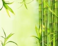 Bamboo jungle background Royalty Free Stock Photos