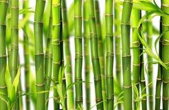 Bamboo jungle background stock photo