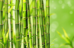 Bamboo jungle background Stock Photography