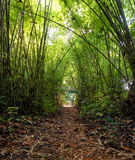 Bamboo Jungle Forest Stock Photos