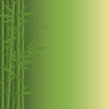 Bamboo. Jungle on green background. Vector illustration Royalty Free Stock Photos