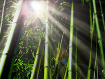 Bamboo Jungle Stock Photography
