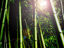 Bamboo Jungle Stock Images