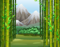 Bamboo jungle with mountains background Royalty Free Stock Image