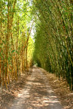 Bamboo lane Royalty Free Stock Image