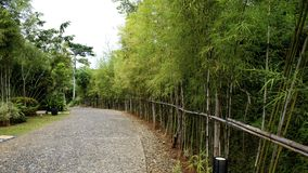 Bamboo lane Royalty Free Stock Images