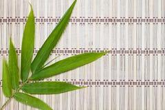 Bamboo Leaf Stock Photos