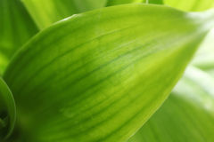 Bamboo leaf Stock Photos