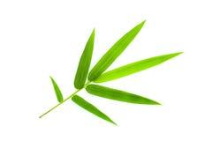 Bamboo leaf. Isolate on white Royalty Free Stock Image