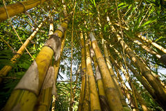 Bamboo with leaf against sky. Stock Photography