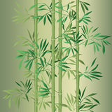 Bamboo leaf background. Floral seamless texture with leaves. Stock Photos