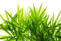 Bamboo leaf background Royalty Free Stock Images