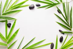 Free Bamboo Leaf Background. White Paper With Tropical Leaf Ornament. Royalty Free Stock Photo - 99506565