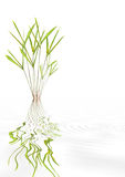 Bamboo Leaf Beauty Royalty Free Stock Photos