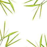 Bamboo Leaf Border Stock Photography