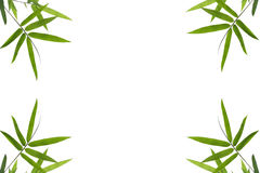 Bamboo leaf border background Royalty Free Stock Photos