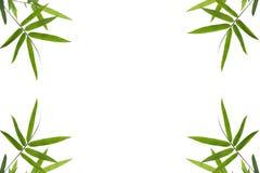 Bamboo leaf border background. On white isolat Royalty Free Stock Photos