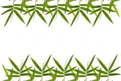Bamboo leaf border background Royalty Free Stock Photo