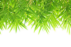 Bamboo leaf border design Royalty Free Stock Photo
