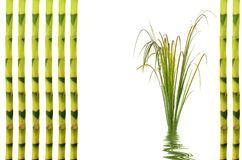 Bamboo Leaf Grass Royalty Free Stock Photography