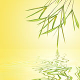 Bamboo Leaf Grass Beauty Royalty Free Stock Photos