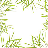 Bamboo Leaf Grass Border Royalty Free Stock Photos