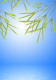Bamboo Leaf Grass over Water Royalty Free Stock Photos