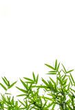 Bamboo Leaf Royalty Free Stock Photo