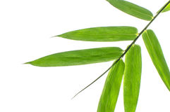 Bamboo Leaf Stock Photo