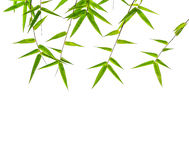Bamboo leaf Royalty Free Stock Photography