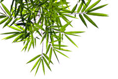 Bamboo leaf, Isolated Stock Images