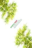 Bamboo leaf isolated Royalty Free Stock Photo