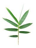 Bamboo leaf isolated Stock Photos