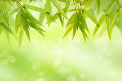 Bamboo leaf and light soft green background Stock Image