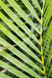 Bamboo leaf raindrops Stock Image